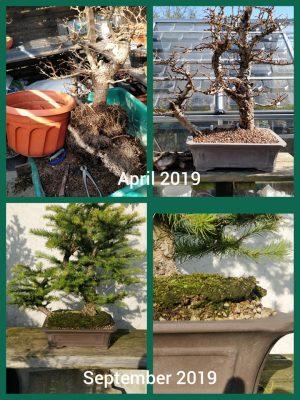 Podłoże do bonsai-terramol (kicidama, euroakadama) 40l-20kg (3-6mm)